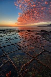 Tessellated Pavement rock formation Eaglehawk Neck Tasmania by JJ Harrison