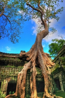 th century temple in Angkor Cambodia x