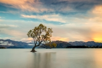That Lake Wanaka Tree New Zealand