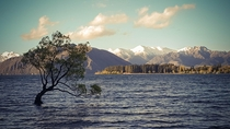 That One Tree on Lake Wanaka -