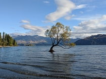 That ridiculously famous tree Wanaka NZ