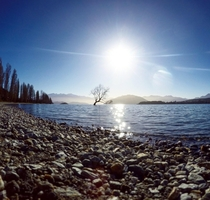 That Wanaka Tree Taken winter of  at Lake Wanaka New Zealand