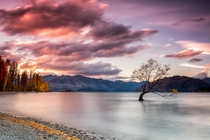 That Wanaka Tree Wanaka New Zealand