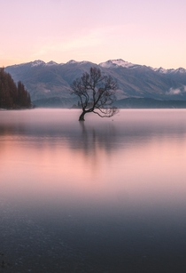 That Wanaka Tree - Wanaka New Zealand  IG andyescapes
