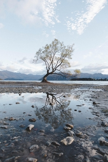 That Wanaka Tree Wanaka NZ