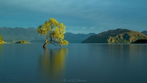 ThatWanakaTree - New Zealand