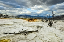The alien landscape of Mammoth Hot Springs - Yellowstone National Park WY