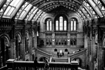 The amazing Natural History Museum London