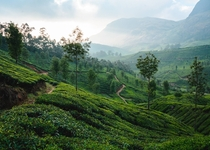 The amazing tea fields of Munnar India  OC theworldwalk