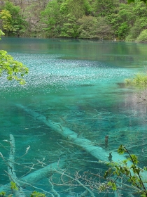 The amazing transparent AND colorful water of Jiu Zai Gou Sichuan-China  Gallery in comment