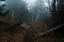 The Appalachian Trail South of Clingmans Dome The Great Smoky Mountains National Park I love our gloomy forests