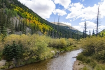 The Aspen trees in Colorado in September are beautiful