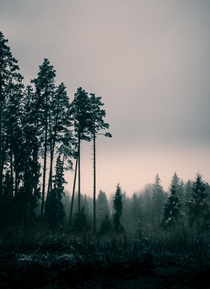 The atmosphere of this place me stop and forget about my wet shoes Lonely pines in a misty forest Belarus