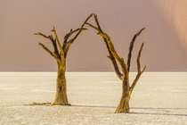 The austere beauty of Deadvlei Namibia  by Daniel Burton