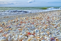 The beaches in Sanibel Island Florida are known for being completely covered by seashells