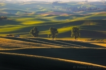 The Beautiful Rolling Hills of Palouse Washington Photo by Danny Seidman