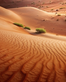 The beautiful textures of the desert Abu Dhabi UAE