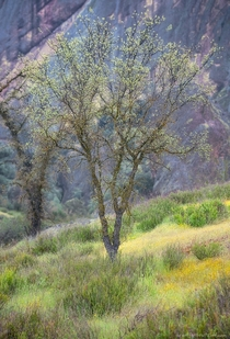 The beginnings of spring in Pinnacles National Park CA