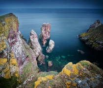 The Birds Paradise at St Abbs Head Scotland