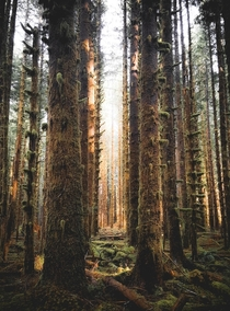 The Black Forest at Olympic National Park in Washington