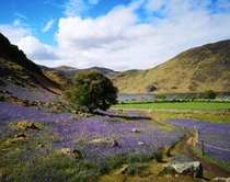 The Bluebells of Rannerdale Cumbria England  x I love where I live