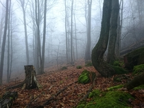 The Bruce Trail Ontario Canada by uSpaceWeb  x-post rnyctohylophobia