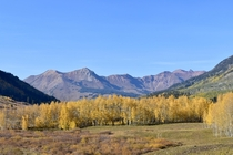 The changing fall colors in Crested Butte Colorado