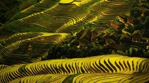 The charming Dazhainestled in the paddle field covered hills of Longsheng Guanxi province China
