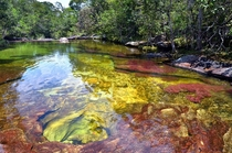 The clear waters of Cao Cristales Colombia