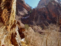 The cliffs at Zion National Park in the spring