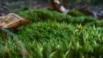 The closer you get the prettier moss is