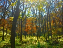 The Color Change of a forest in Iowa last Fall Stone State Park