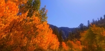 The color is popping off in the Eastern SierraI love where you vacation The road to North Lake in Bishop CA