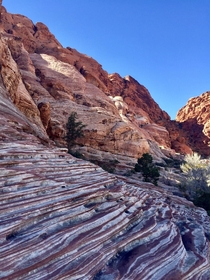 The colours of Calico Basin Red Rock Canyon Las Vegas NV