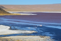The colours of Laguna Colorada Bolivia with its Flamingos at m above sea level OC