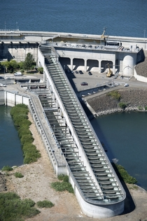 The Dalles Dam East Fish Ladder