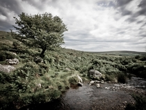 The delightful Dartmoor