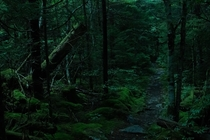 The Dense Forests of Spruce Knob West Virginia