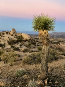 The desert is dry lifeless and boring they said Joshua Tree CA