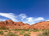 The desert was so alive and green this year Valley of Fire Nevada