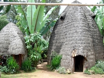 The Dorza tribe in Ethiopia construct their huts m high termites eat away at the bottom and the huts shrink over time- the door is continuously made taller and when huts get too small they are used as storage rooms