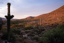 The Eastern side of Saguaro National Park taken at Sunset this past June