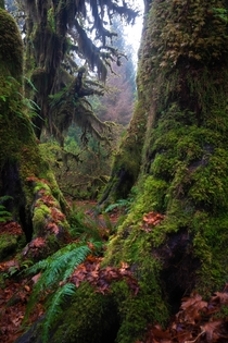 The eerie beauty of the Hoh National Rainforest Washington