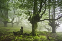 The eerie mist of the Beechwood of Mount Izarraitz Basque Country Spain  Photo by Jontake