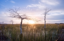 The Everglades of southern Florida is known as the sea of grass - a  mile wide  mile long river that flows a quarter of a mile per day Theres no other place like it on earth