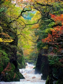 The Fairy Glen is a secluded and enchanting gorge on the river Conwy near to Betws-y-Coed in Wales Photo by Brian McKay