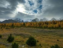 The fall colours of Larch Valley in Banff Alberta