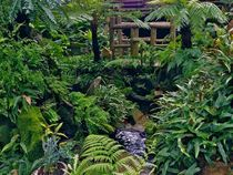 The fernery at the Morris Arboretum in Philadelphia