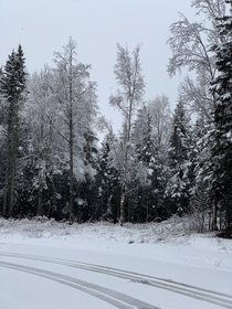 The first snowfall from my hometown in Alaska were awfully late this year