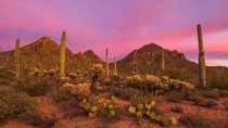 The first Sonoran sunset of  was nothing short of magical in southern Arizona